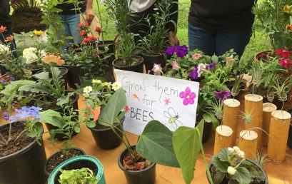 Annual Plant Sale of the Botanical Society