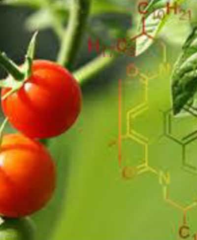 MSc in Applied Organic Chemistry
